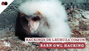Barn Owl Hacking
