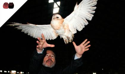 Liberación lechuza común (Tyto alba)