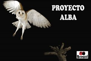 Proyecto Alba (Fase 2)